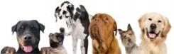Honden uitlaten in Berlijn